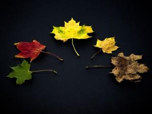 leaves-959593_1280