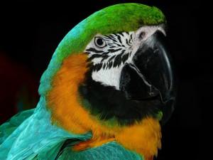 parrot-4078_1280