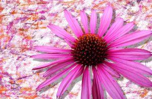 flower-1634054_1280